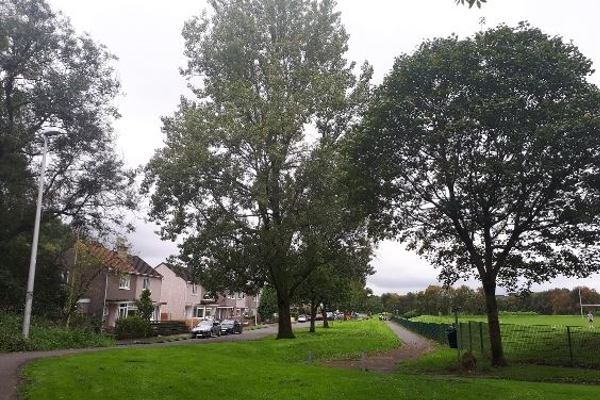 Conon Avenue for ScW