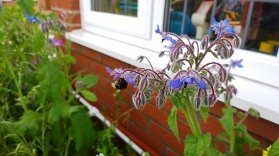 Planter v1 bee